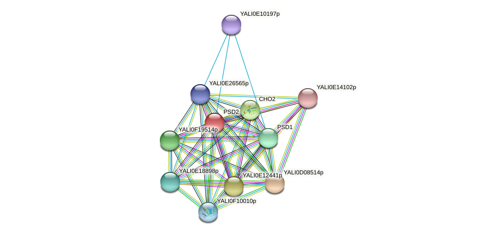 PSD2 protein (Yarrowia lipolytica) - STRING interaction network