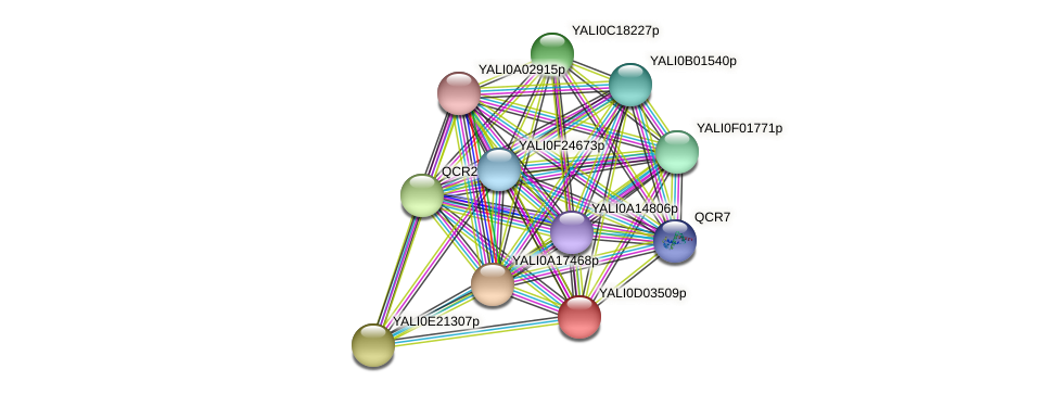XP_502366.1 protein (Yarrowia lipolytica) - STRING interaction network