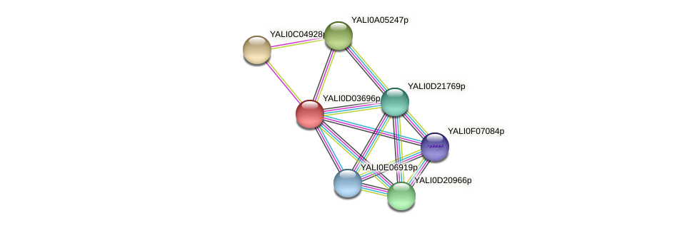 XP_502375.1 protein (Yarrowia lipolytica) - STRING interaction network