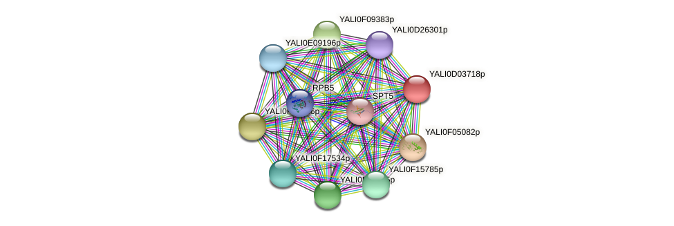 XP_502376.1 protein (Yarrowia lipolytica) - STRING interaction network
