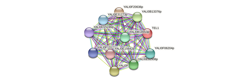 TEL1 protein (Yarrowia lipolytica) - STRING interaction network