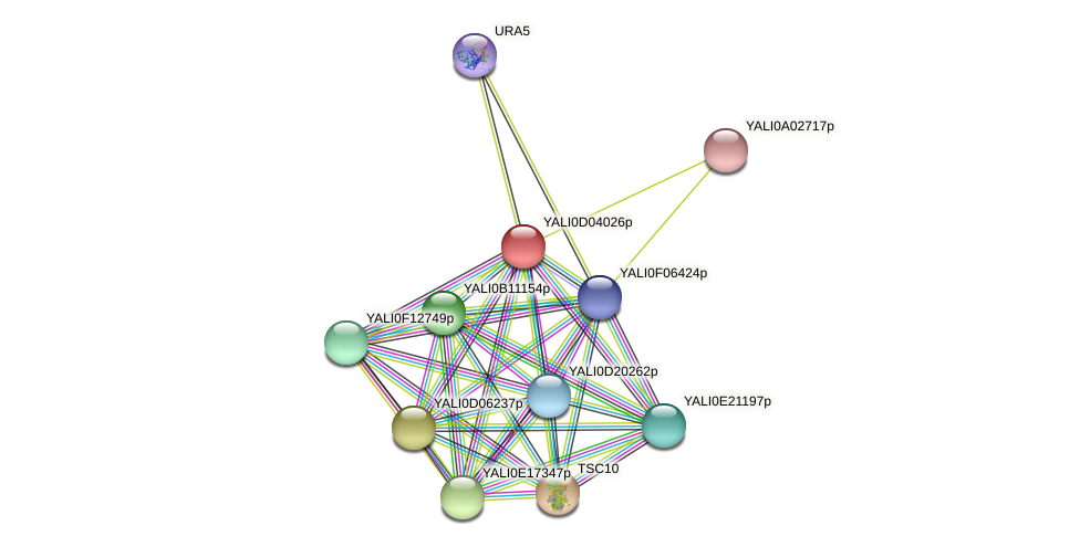XP_502386.1 protein (Yarrowia lipolytica) - STRING interaction network