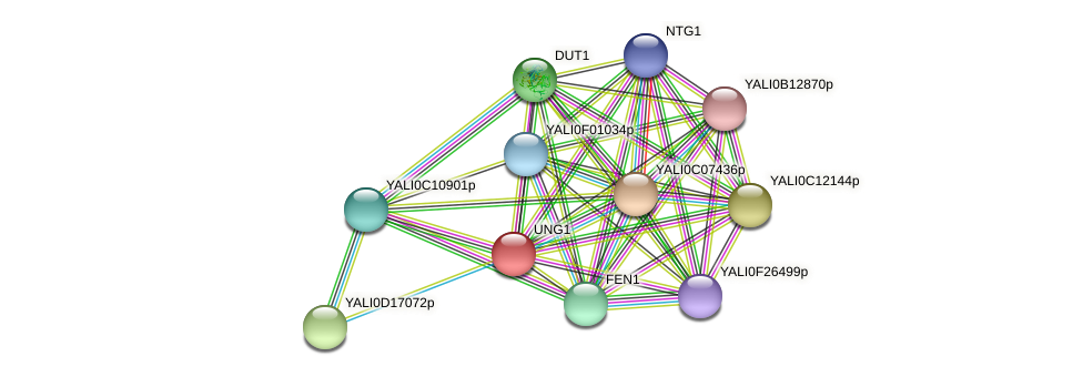 UNG1 protein (Yarrowia lipolytica) - STRING interaction network
