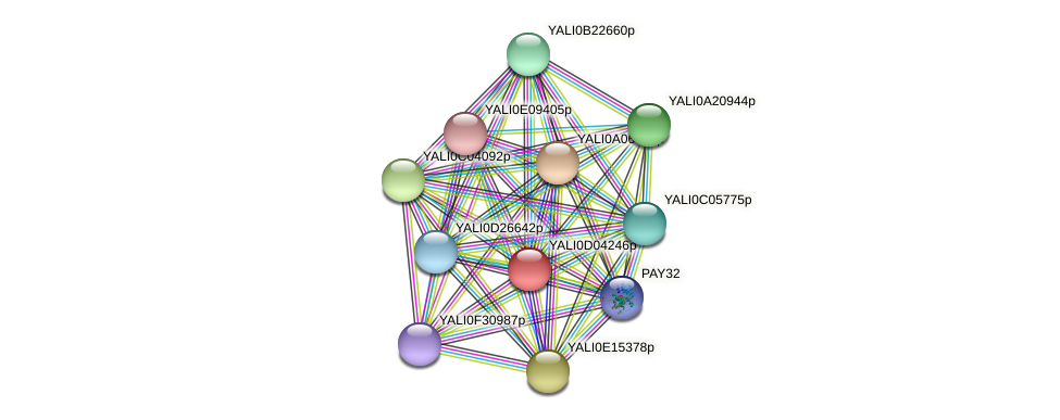 XP_502396.1 protein (Yarrowia lipolytica) - STRING interaction network