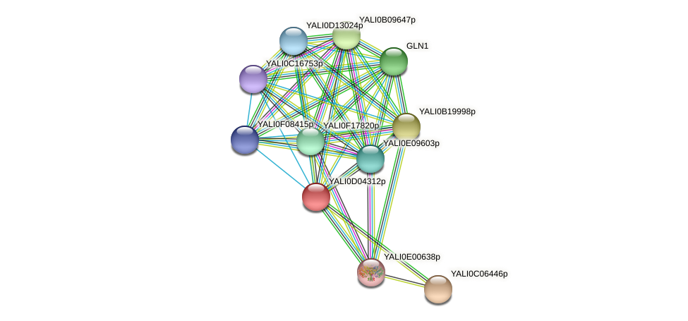 XP_502399.1 protein (Yarrowia lipolytica) - STRING interaction network