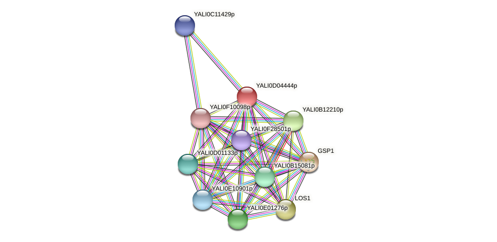 XP_502405.2 protein (Yarrowia lipolytica) - STRING interaction network