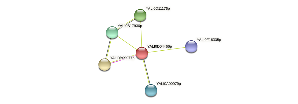 XP_502406.1 protein (Yarrowia lipolytica) - STRING interaction network