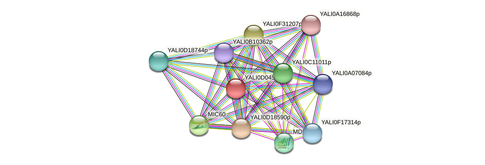 XP_502409.1 protein (Yarrowia lipolytica) - STRING interaction network