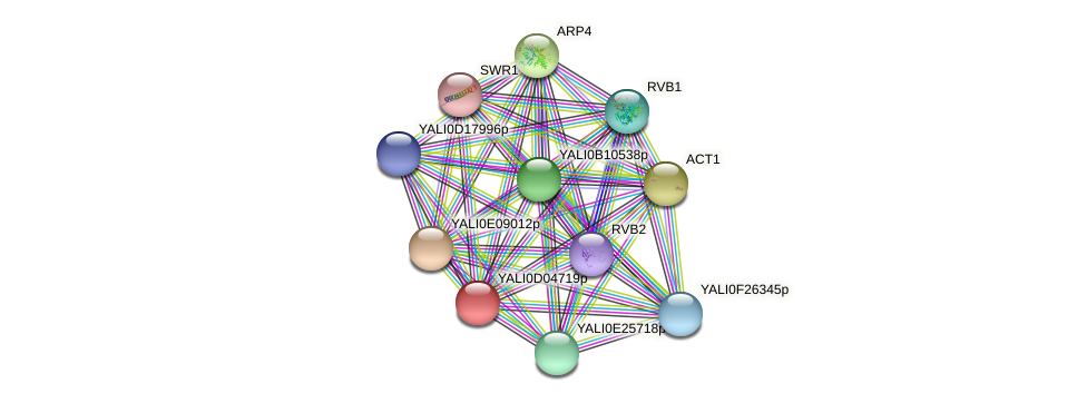 XP_502414.1 protein (Yarrowia lipolytica) - STRING interaction network