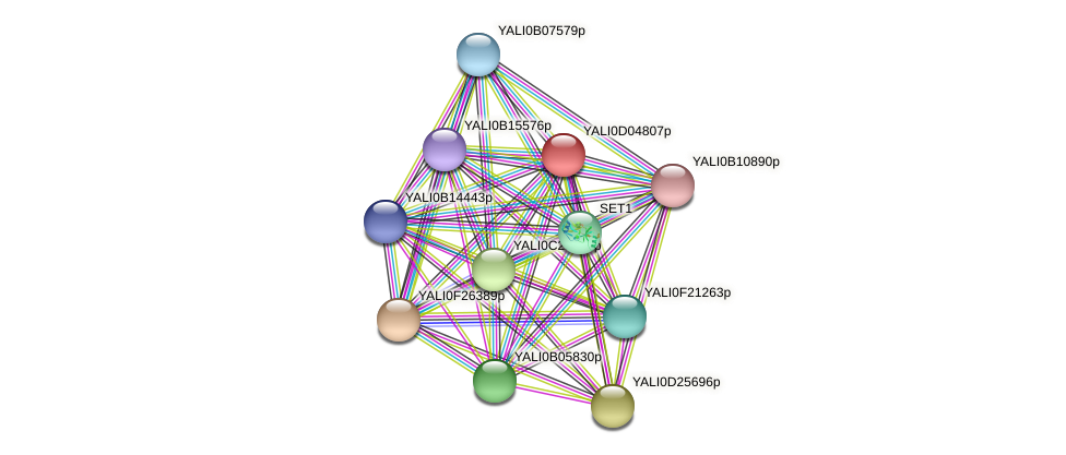 XP_502418.1 protein (Yarrowia lipolytica) - STRING interaction network