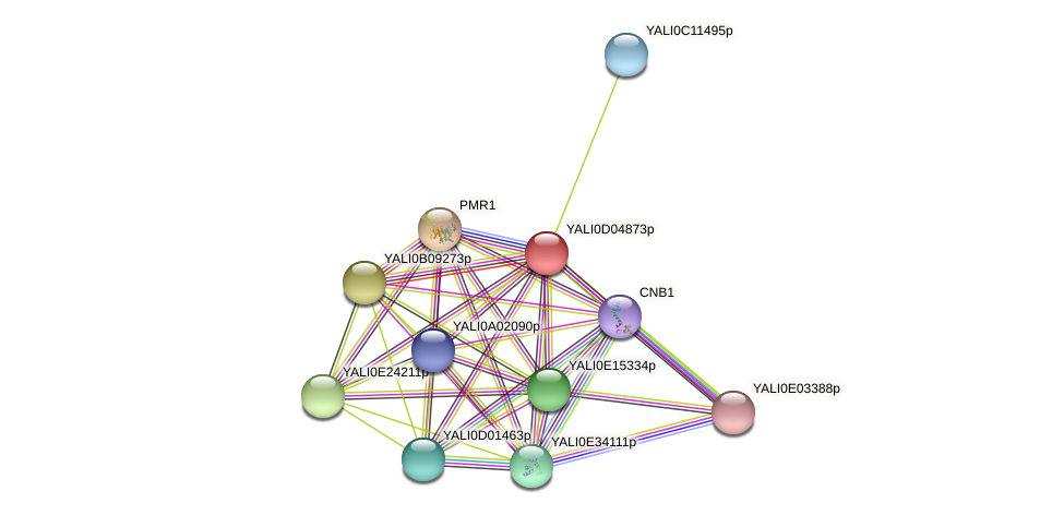 XP_502421.2 protein (Yarrowia lipolytica) - STRING interaction network