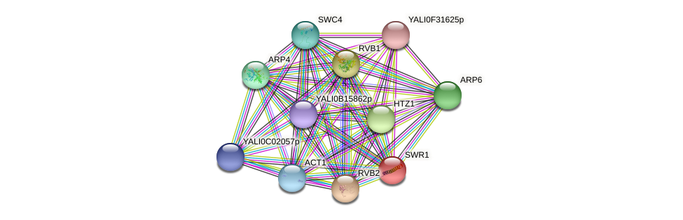 SWR1 protein (Yarrowia lipolytica) - STRING interaction network