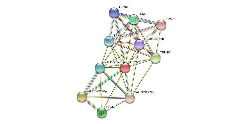 TRM5 protein (Yarrowia lipolytica) - STRING interaction network