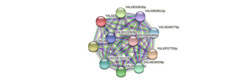 XP_502446.1 protein (Yarrowia lipolytica) - STRING interaction network