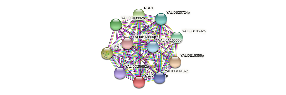 XP_502449.2 protein (Yarrowia lipolytica) - STRING interaction network