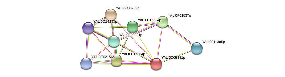 XP_502461.1 protein (Yarrowia lipolytica) - STRING interaction network