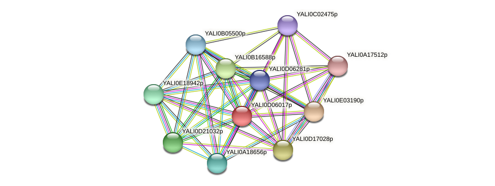 XP_502468.1 protein (Yarrowia lipolytica) - STRING interaction network