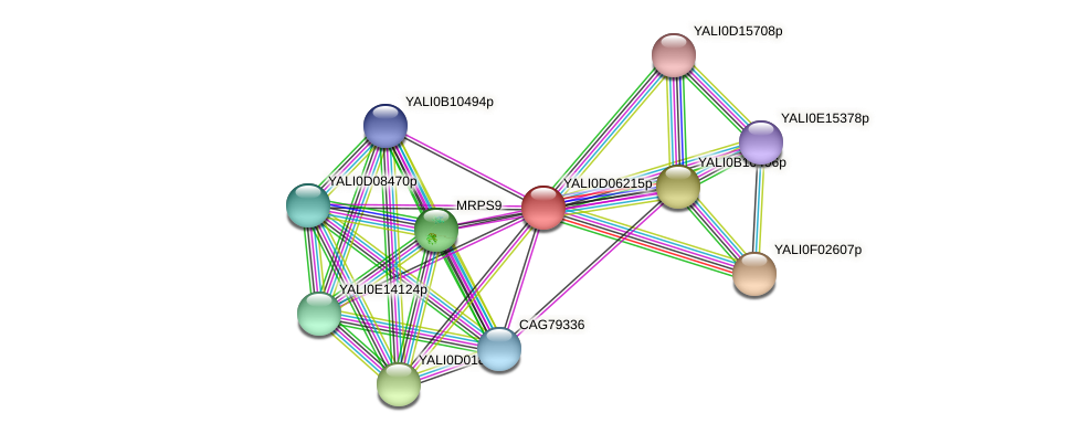 XP_502475.1 protein (Yarrowia lipolytica) - STRING interaction network