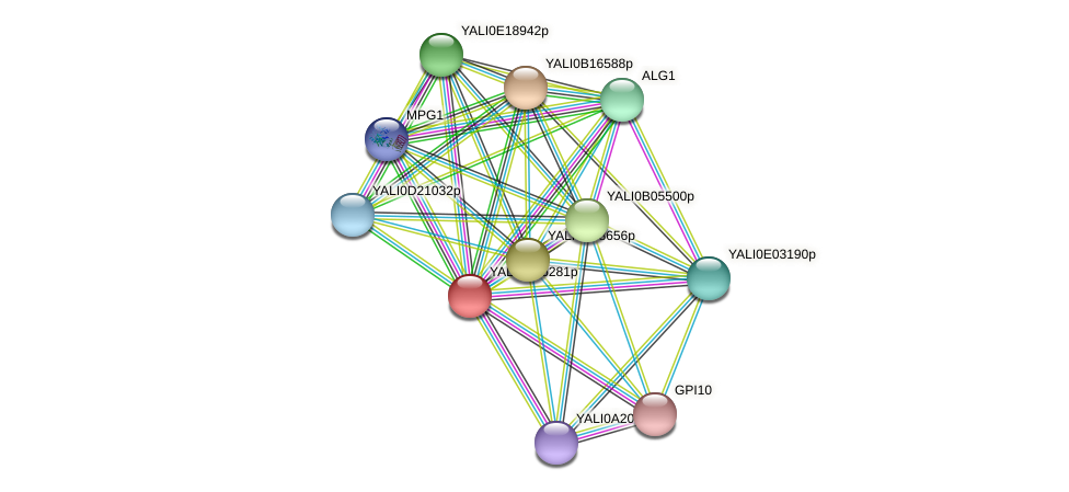 XP_502478.1 protein (Yarrowia lipolytica) - STRING interaction network