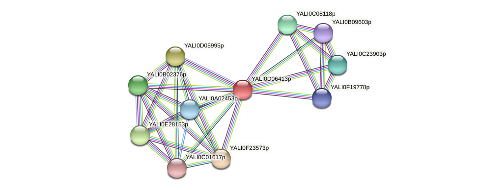 XP_502484.1 protein (Yarrowia lipolytica) - STRING interaction network