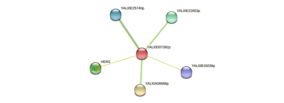 XP_502529.2 protein (Yarrowia lipolytica) - STRING interaction network