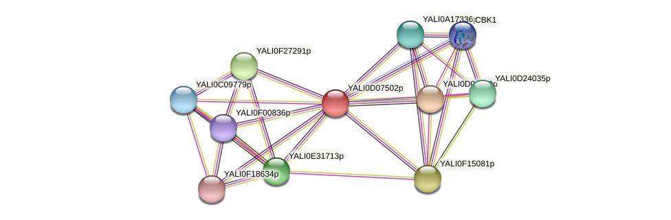 XP_502534.1 protein (Yarrowia lipolytica) - STRING interaction network
