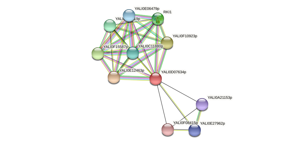 XP_502540.1 protein (Yarrowia lipolytica) - STRING interaction network