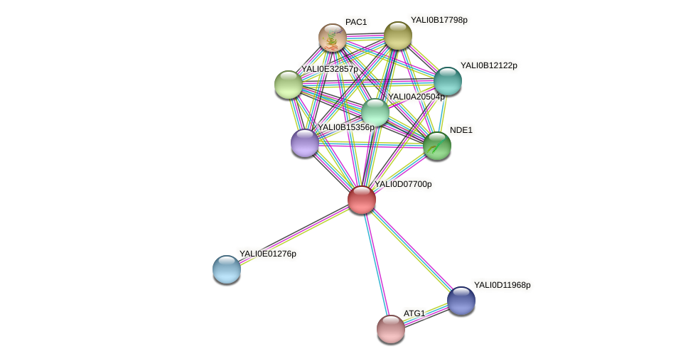 XP_502543.1 protein (Yarrowia lipolytica) - STRING interaction network