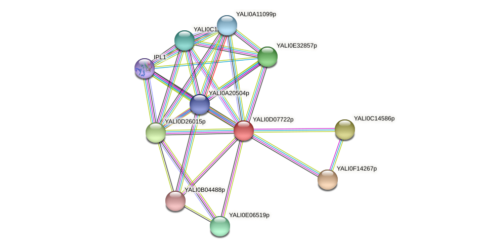 XP_502544.1 protein (Yarrowia lipolytica) - STRING interaction network