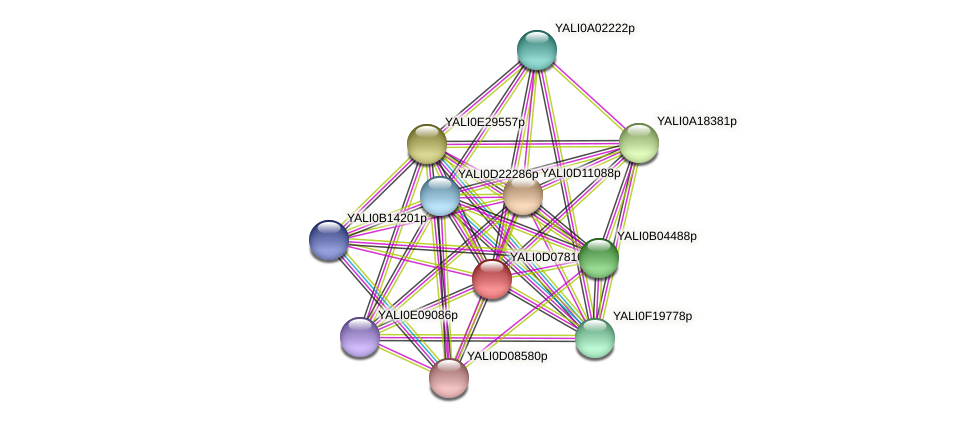 XP_502548.1 protein (Yarrowia lipolytica) - STRING interaction network