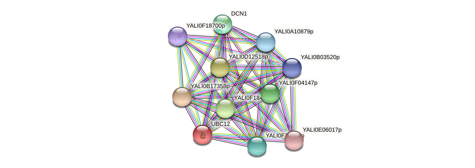UBC12 protein (Yarrowia lipolytica) - STRING interaction network