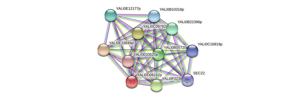 XP_502561.1 protein (Yarrowia lipolytica) - STRING interaction network