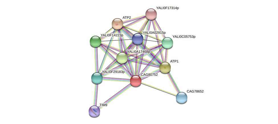 XP_502564.1 protein (Yarrowia lipolytica) - STRING interaction network
