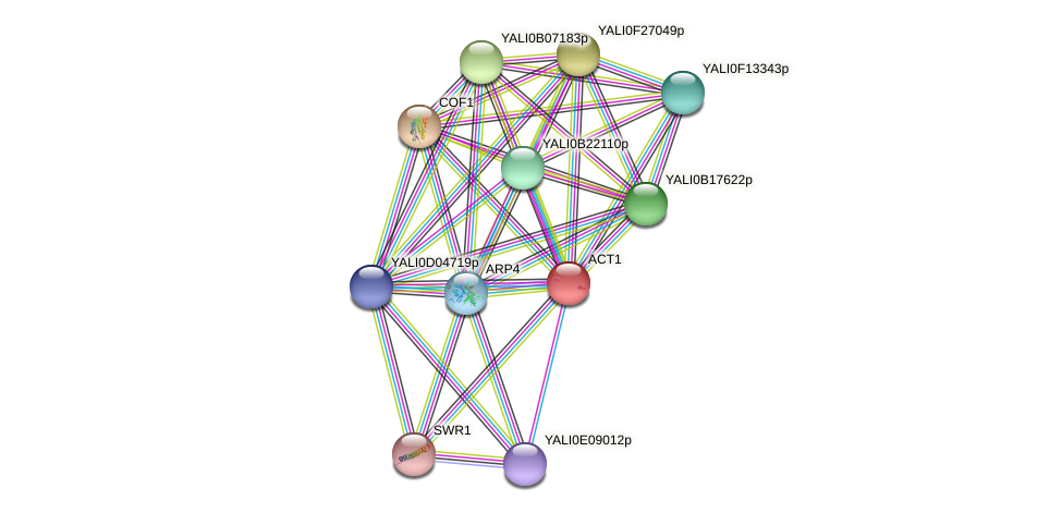 ACT1 protein (Yarrowia lipolytica) - STRING interaction network
