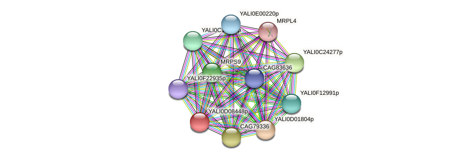 XP_502574.1 protein (Yarrowia lipolytica) - STRING interaction network
