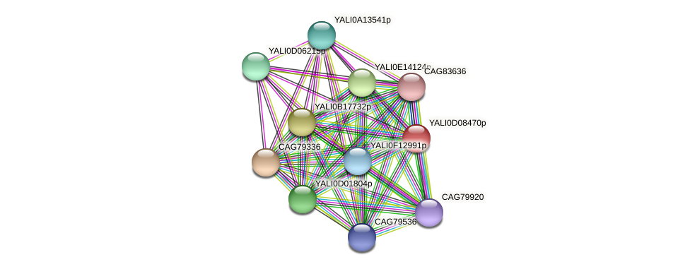 XP_502575.1 protein (Yarrowia lipolytica) - STRING interaction network