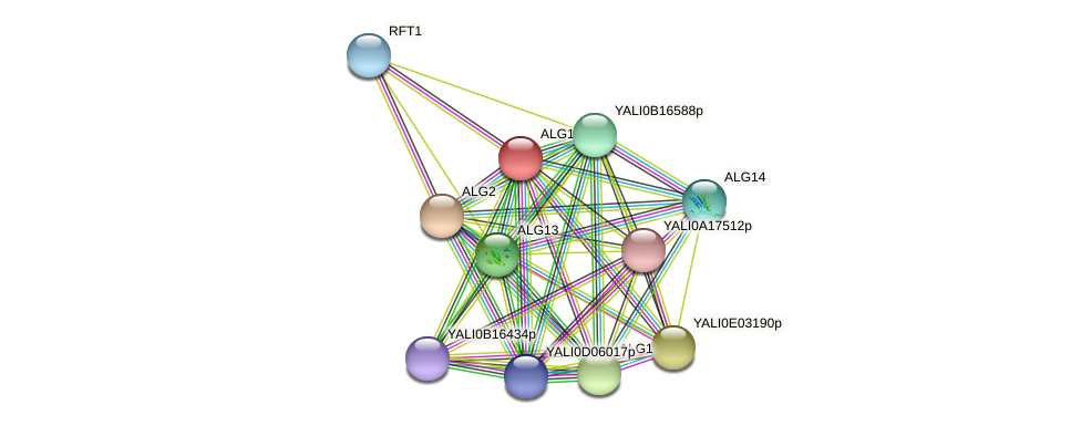 ALG11 protein (Yarrowia lipolytica) - STRING interaction network
