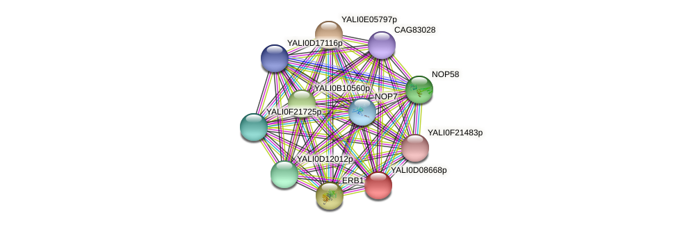 XP_502584.1 protein (Yarrowia lipolytica) - STRING interaction network
