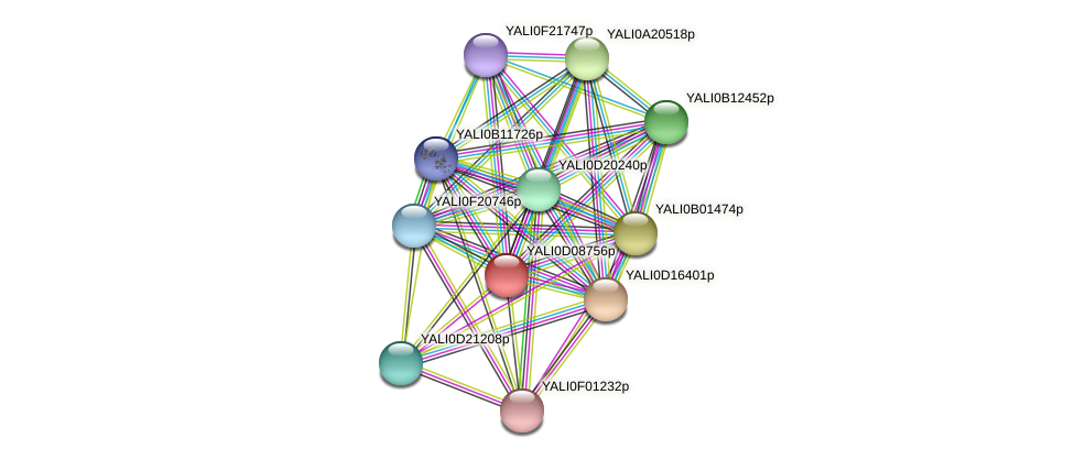 XP_502588.1 protein (Yarrowia lipolytica) - STRING interaction network