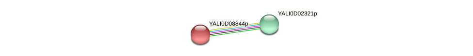 XP_502592.1 protein (Yarrowia lipolytica) - STRING interaction network