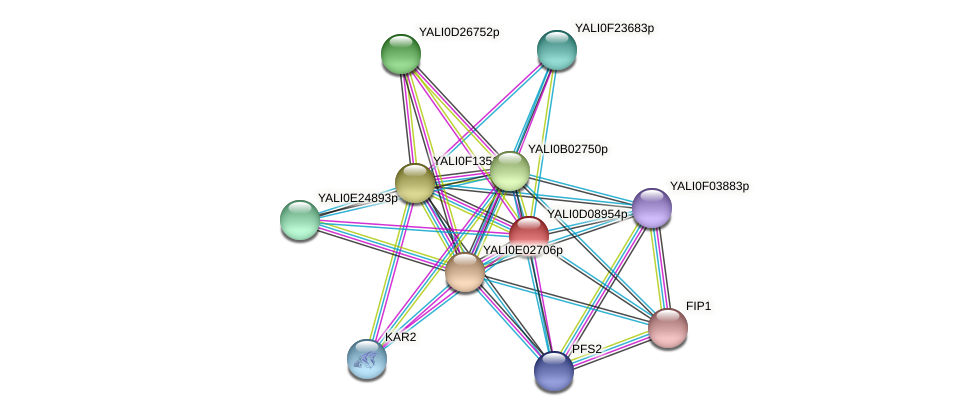 XP_502597.1 protein (Yarrowia lipolytica) - STRING interaction network