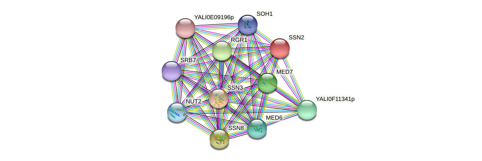 XP_502603.2 protein (Yarrowia lipolytica) - STRING interaction network