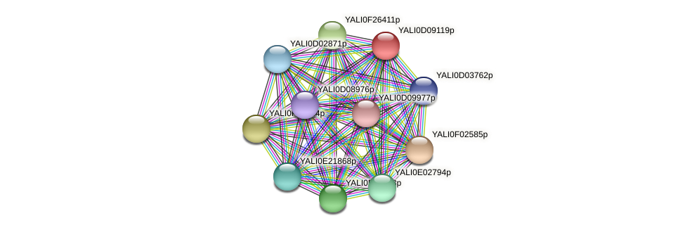 XP_502605.1 protein (Yarrowia lipolytica) - STRING interaction network