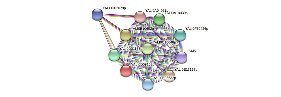 XP_502607.1 protein (Yarrowia lipolytica) - STRING interaction network