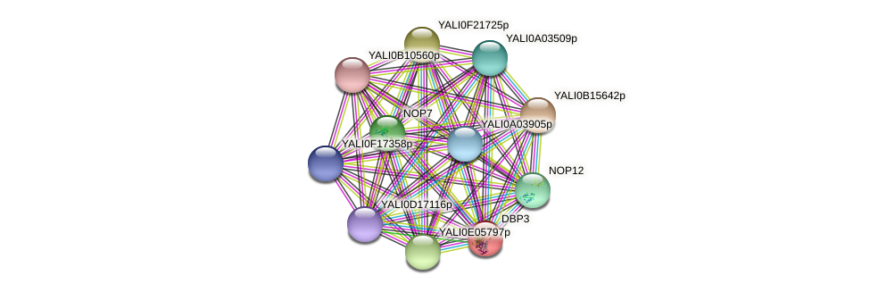 DBP3 protein (Yarrowia lipolytica) - STRING interaction network