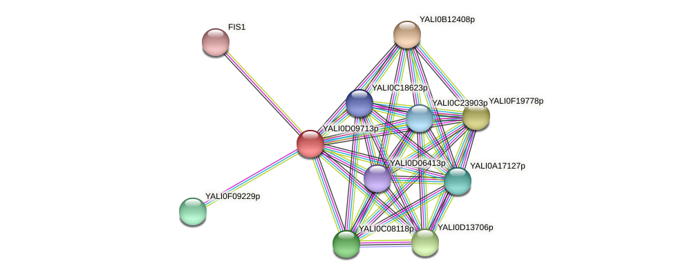 XP_502627.1 protein (Yarrowia lipolytica) - STRING interaction network