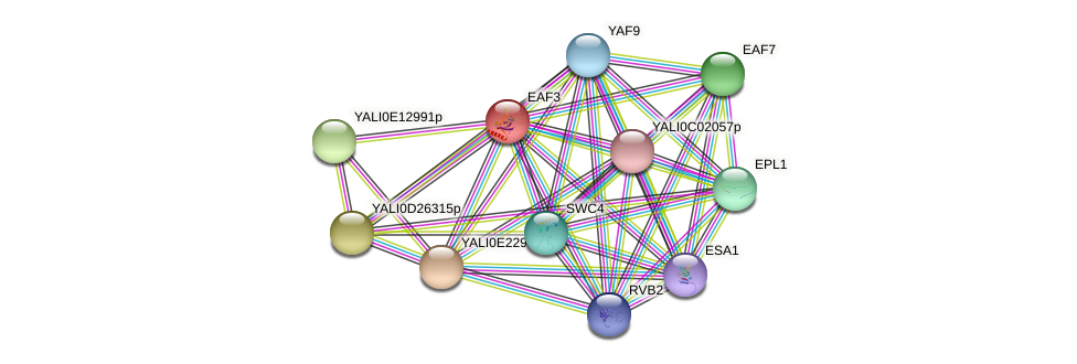 EAF3 protein (Yarrowia lipolytica) - STRING interaction network