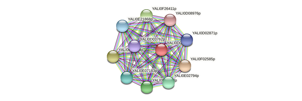 XP_502639.1 protein (Yarrowia lipolytica) - STRING interaction network