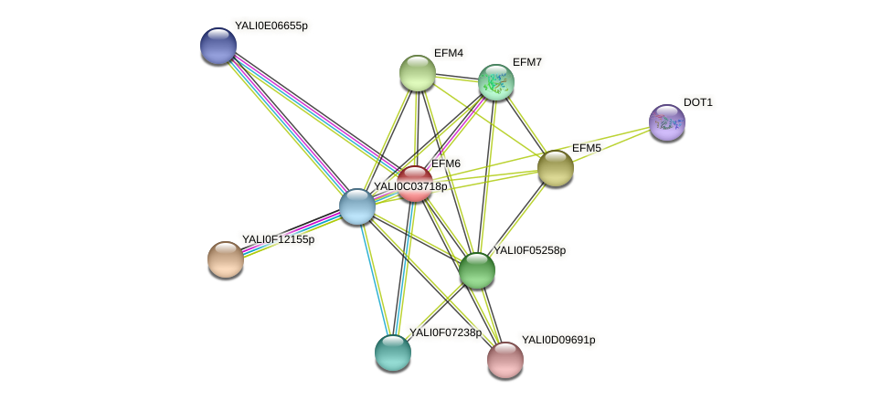 XP_502650.1 protein (Yarrowia lipolytica) - STRING interaction network