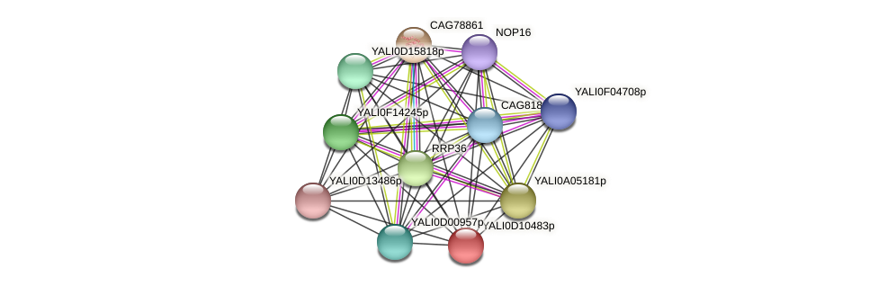 XP_502657.1 protein (Yarrowia lipolytica) - STRING interaction network